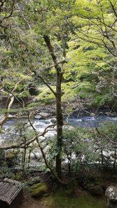 20170425 095755 169x300 - Listy z podróży - Hakone i Tonosawa