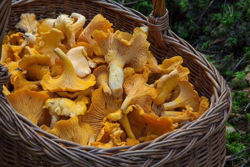 fungus 1194380 1920 840x560 - Rozmarynowe risotto z kurkami