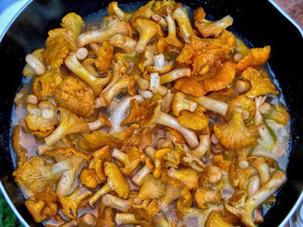 mushrooms 1325332 1920 595x446 - Rozmarynowe risotto z kurkami