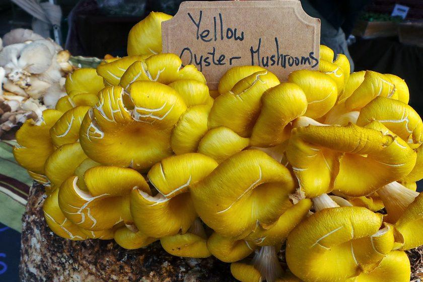 """yellow 790595 840x560 - Panierowane boczniaki z """"gruzińską solą"""""""