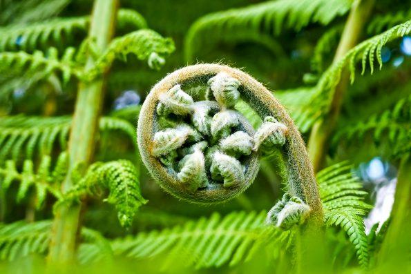 palm fern 2245814 595x397 - Boże Narodzenie - wierzenia i tradycje