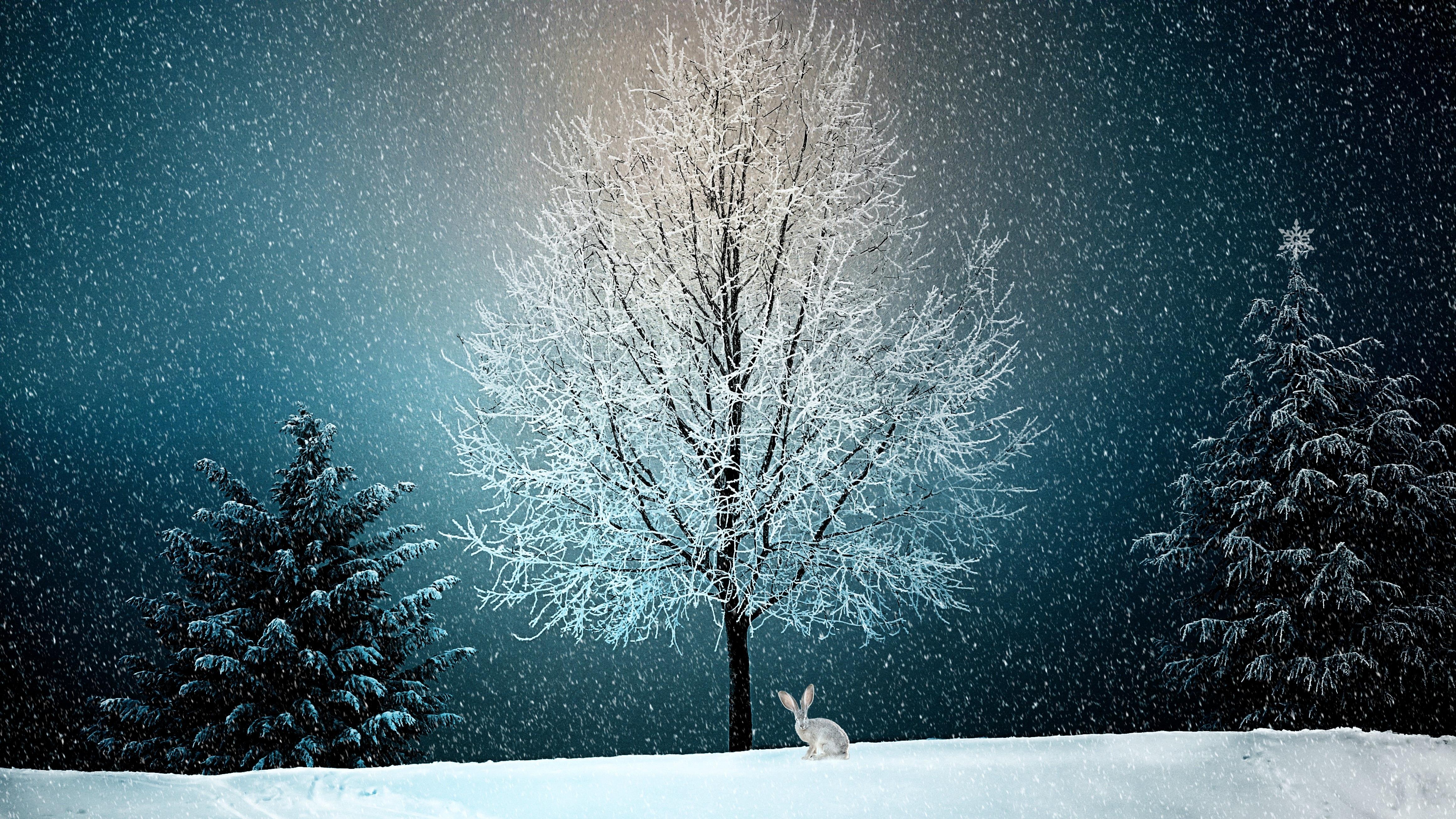 winter 2896970 - Boże Narodzenie - wierzenia i tradycje