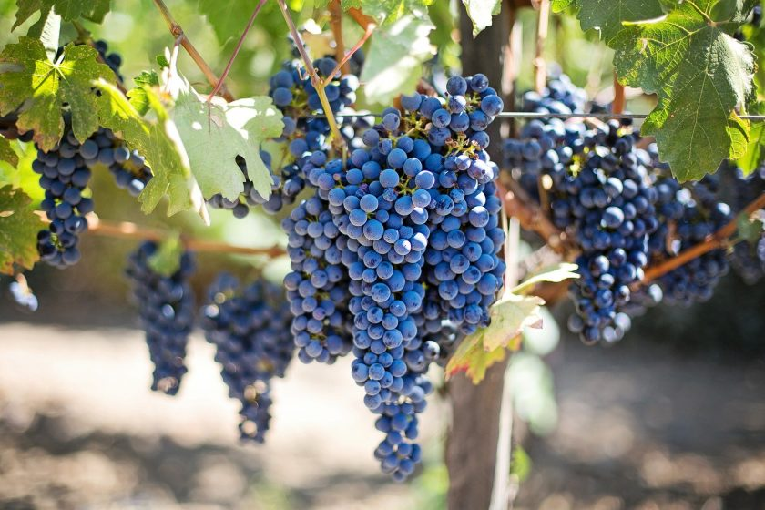 grapes 553464 1920 840x560 - [Degustacja] Hot or Not